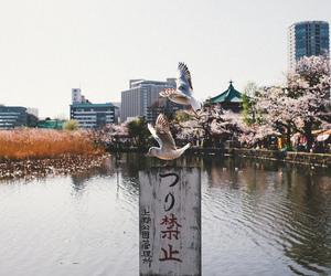 asia, birds, and cherry blossom image
