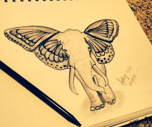 drawing, elephant, and butterfly image