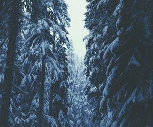 snow and tree image