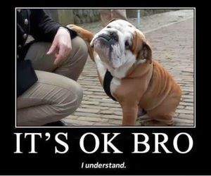 bro, dog, and funny image
