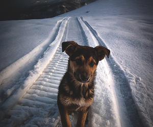 dog, cute, and snow image