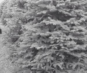 girl, tumblr, and winter image