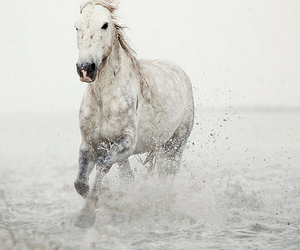 horse, water, and white image
