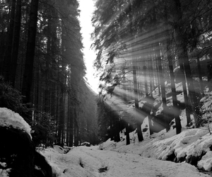 snow, black and white, and forest image