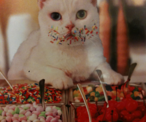 cat, candy, and sweet image