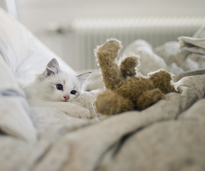 cat, cute, and bed image