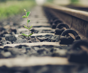nature, plant, and rail image