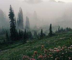 arboles, flores, and naturaleza image