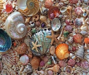 shell, ocean, and beach image