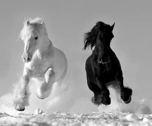 animal, black and white, and pretty image