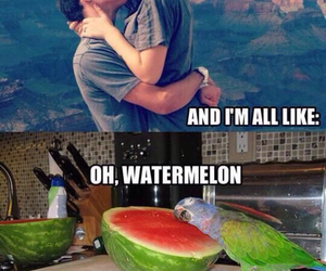watermelon, couple, and funny image