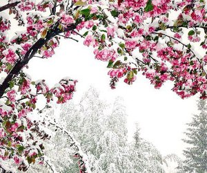 december, nature, and pink image