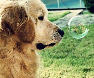 aw, cut, and dog image