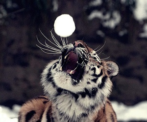 tiger, nature, and snow image