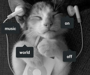 cat, kitty, and music image