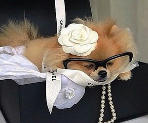 chanel, cute, and dog image