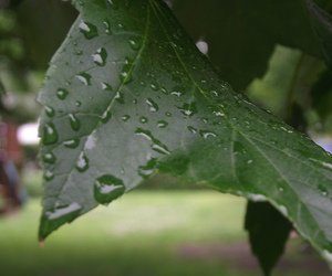 leaves, photography, and rain image