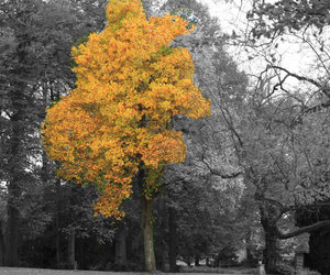 autum, nature, and trees image