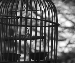 bird cage, black and white, and tree image