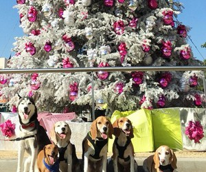 beagles christmas team image