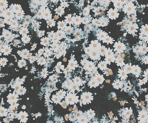 flowers, background, and white image