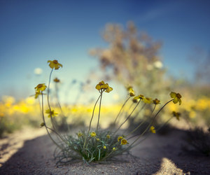desert, photography, and spring wildflowers image