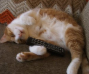 cat, remote, and perfect image