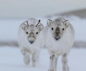 cute, reindeer, and snow image