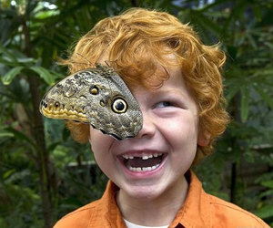 butterfly, boy, and smile image
