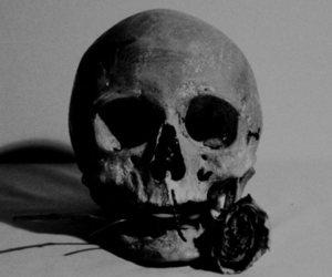 skull, rose, and flower image