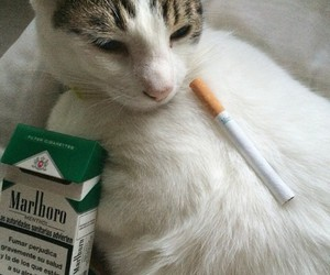 ahahaha, cat, and ciggarette image
