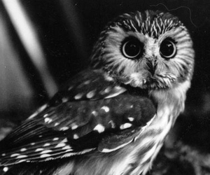 owl, eyes, and animal image