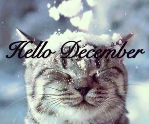 december, cat, and snow image