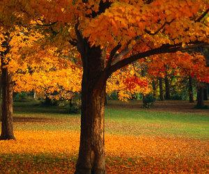 beautiful, autumn, and nature image