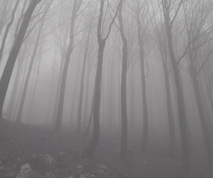 fog, soul, and forest image