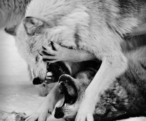 animal, black and white, and love image