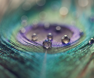 beautiful, photography, and feather image