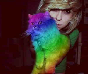 cat, girl, and rainbow image