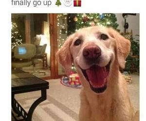 christmas, dog, and decoration image