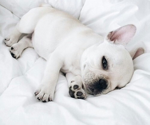 puppies, so, and cute image