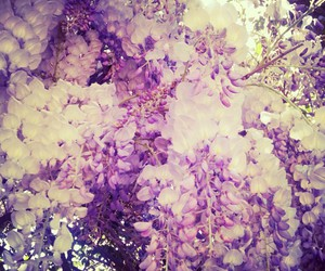 flowers, purple, and cool image