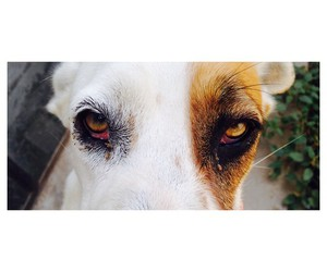 animal, eyes, and love image