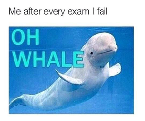 exam, funny, and whale image