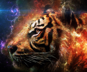 fire, galaxy, and tiger image