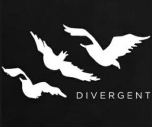 divergent and bird image