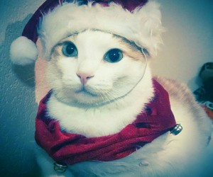 cat, christmas, and love image