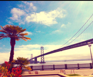 bridge, palmtree, and Sunny image