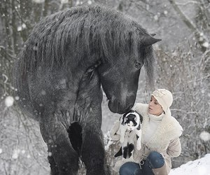 horse, winter, and beauty image