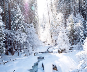 snow, sun, and trees image