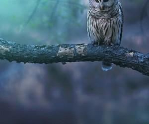 owl and sad image
